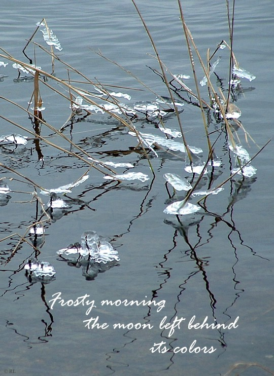 Haiga - frosty morning - WHA - 02-10