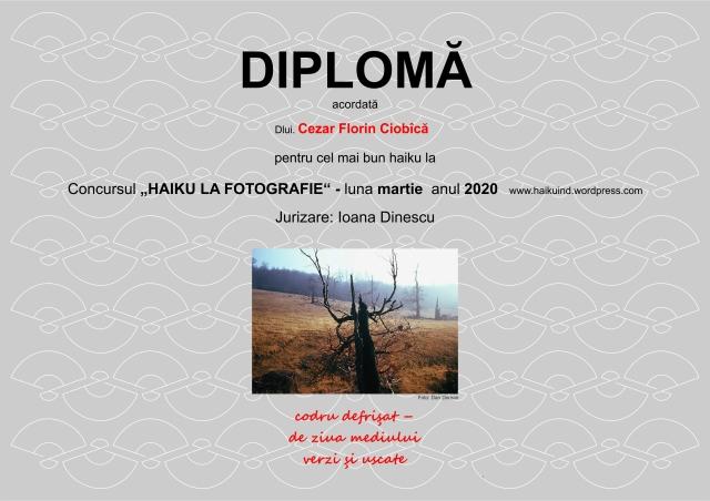 2020 DIPLOMA CONCURS HAIKU model martie CFC